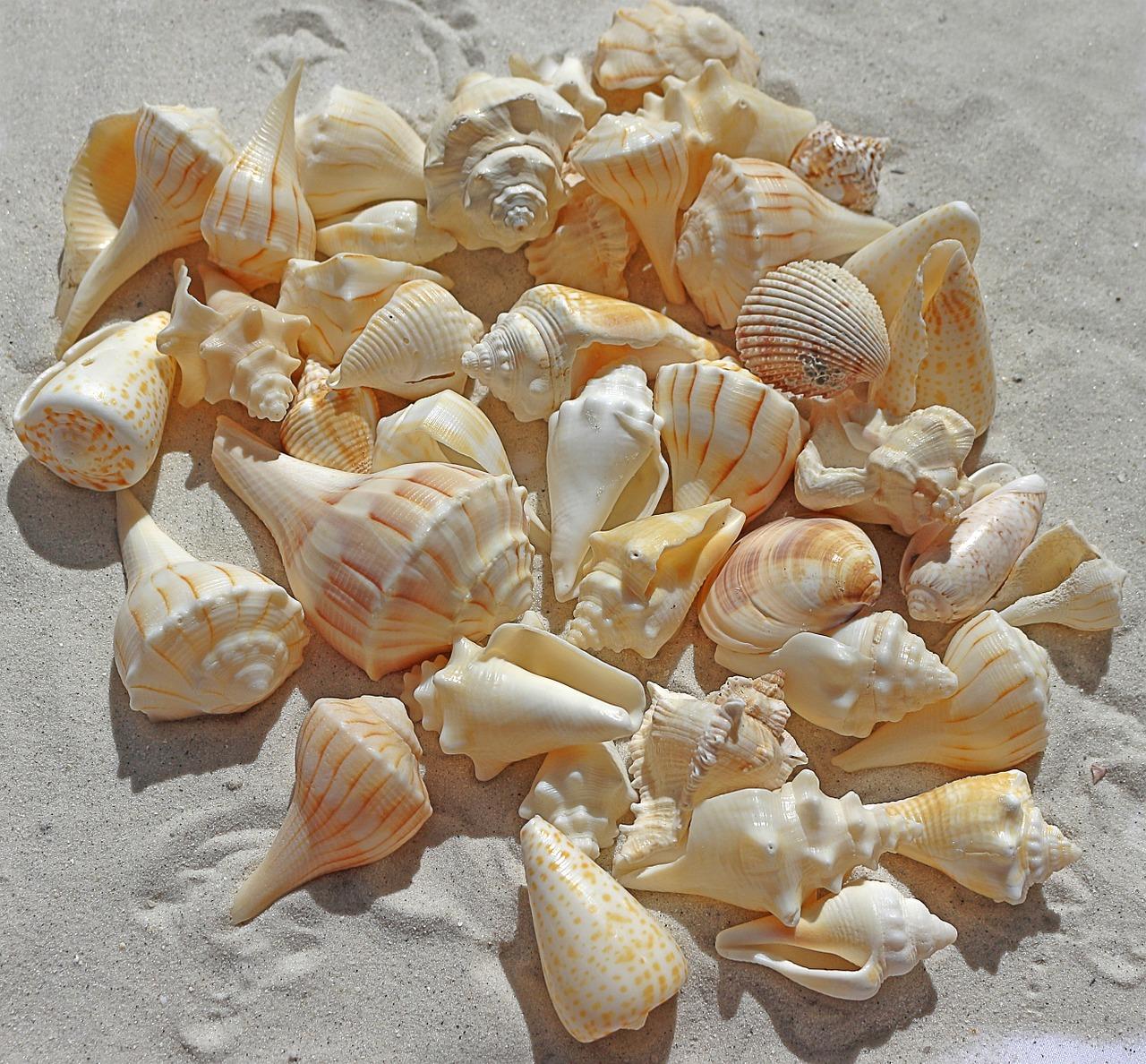 sea-shells-1235586_1280